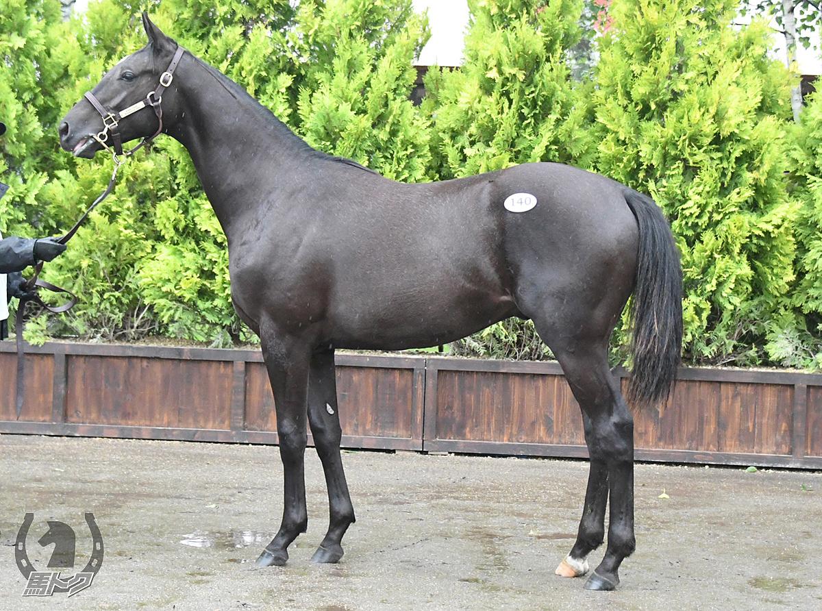 エルゴルドの馬体写真