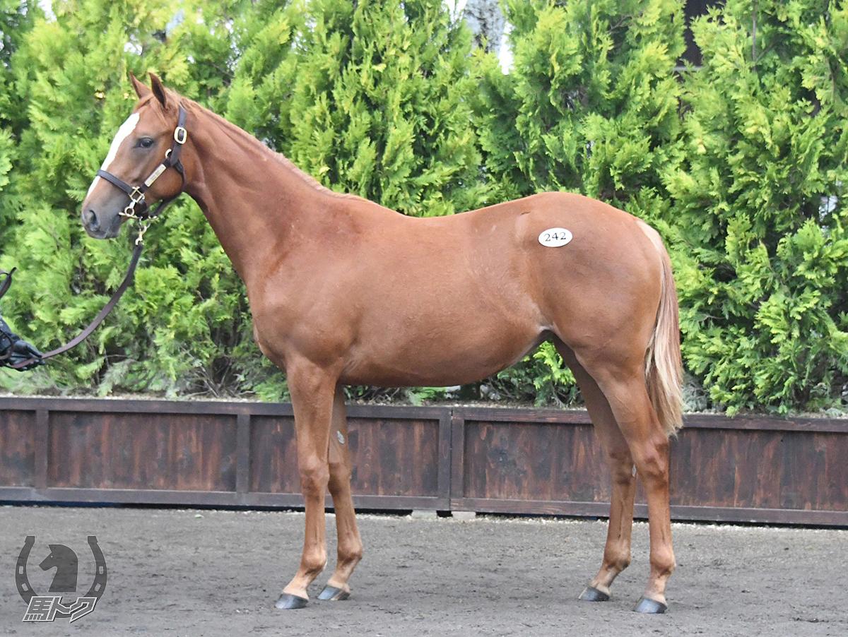 ミネルバの馬体写真