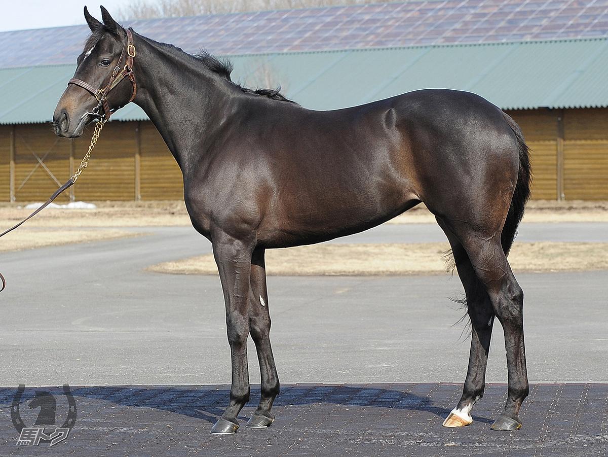 シュルルヴァンの馬体写真