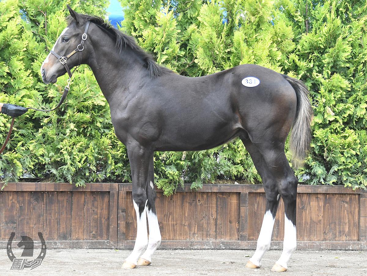 アピテソーロの馬体写真