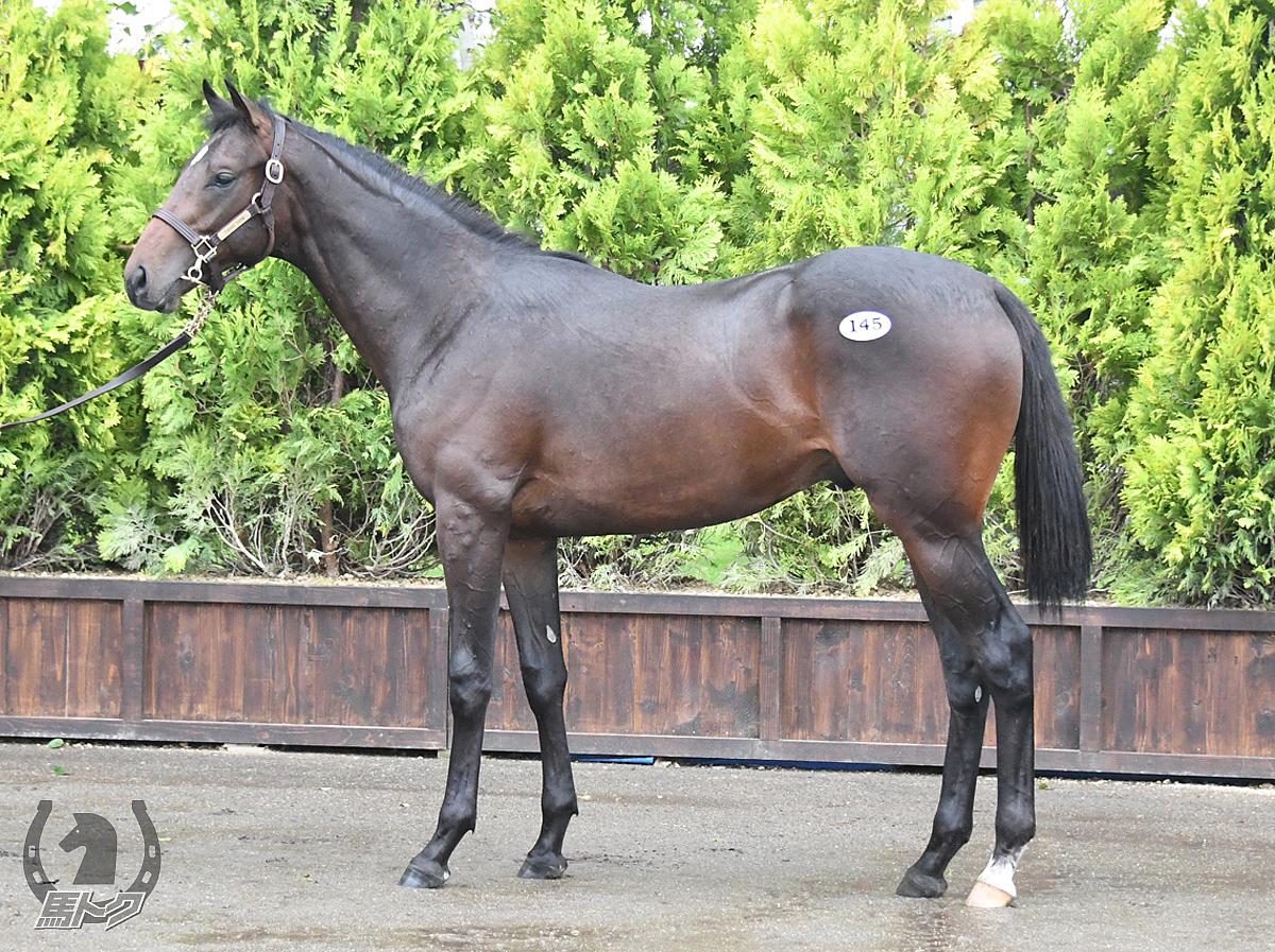 ルカの馬体写真