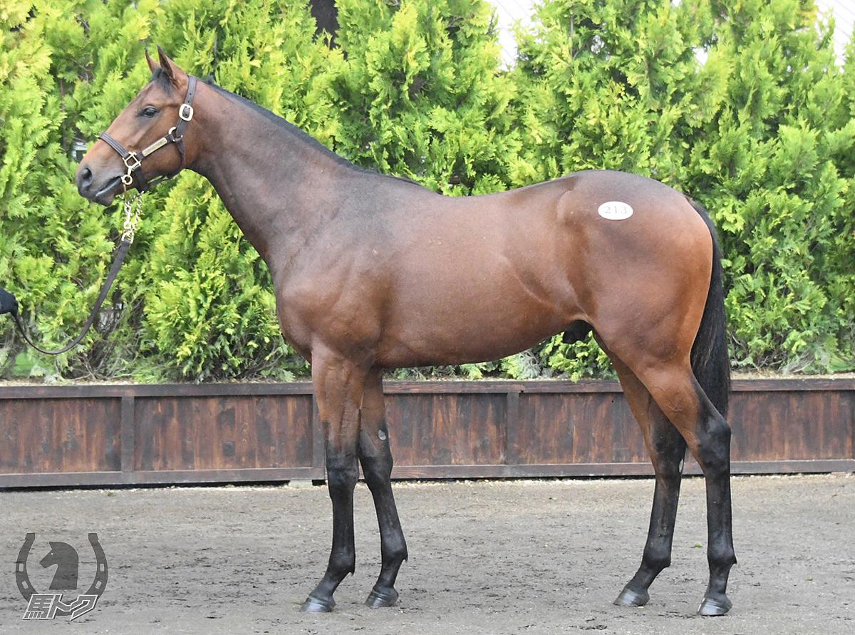 ヴォーノの馬体写真