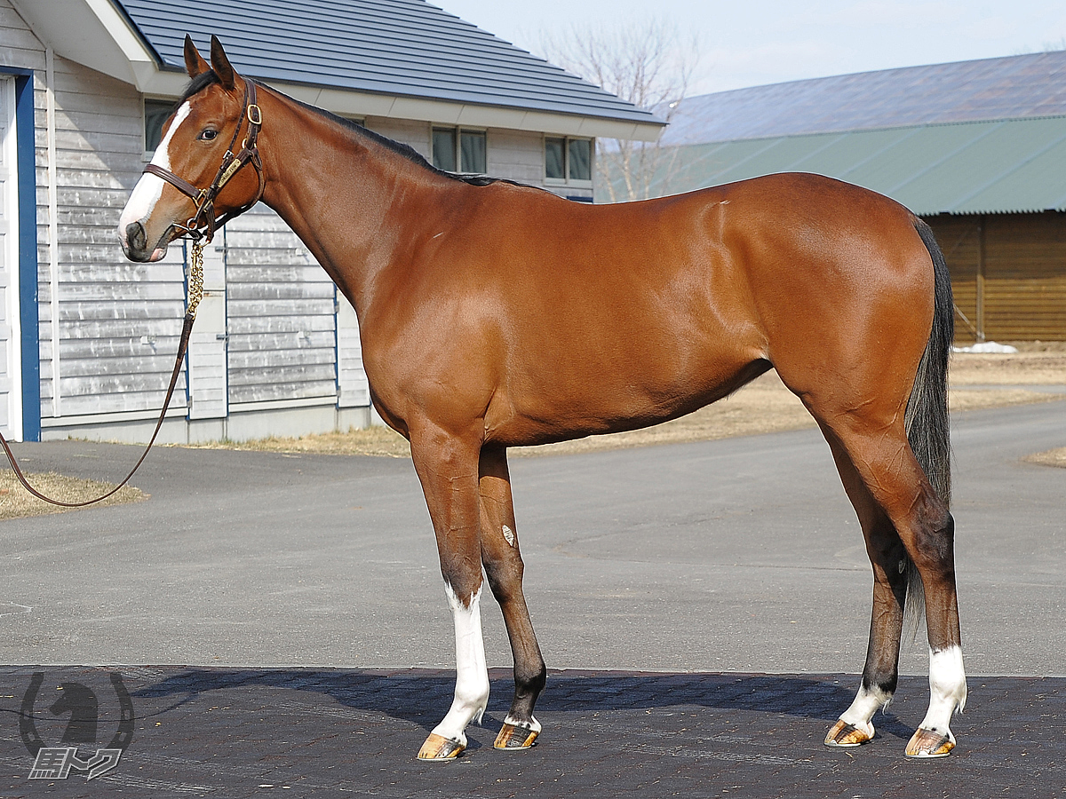 ロッソビアンコの馬体写真