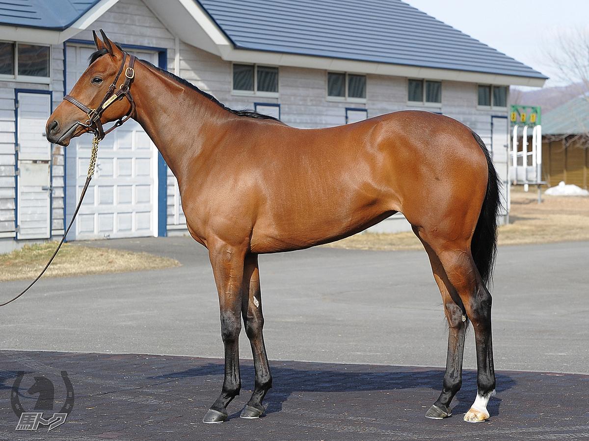 ロッタチャンセズの馬体写真