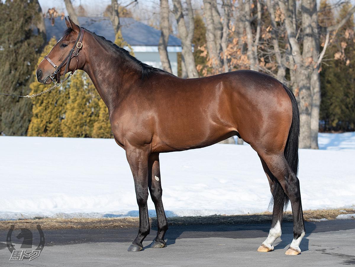 ウェイヴァリーの馬体写真
