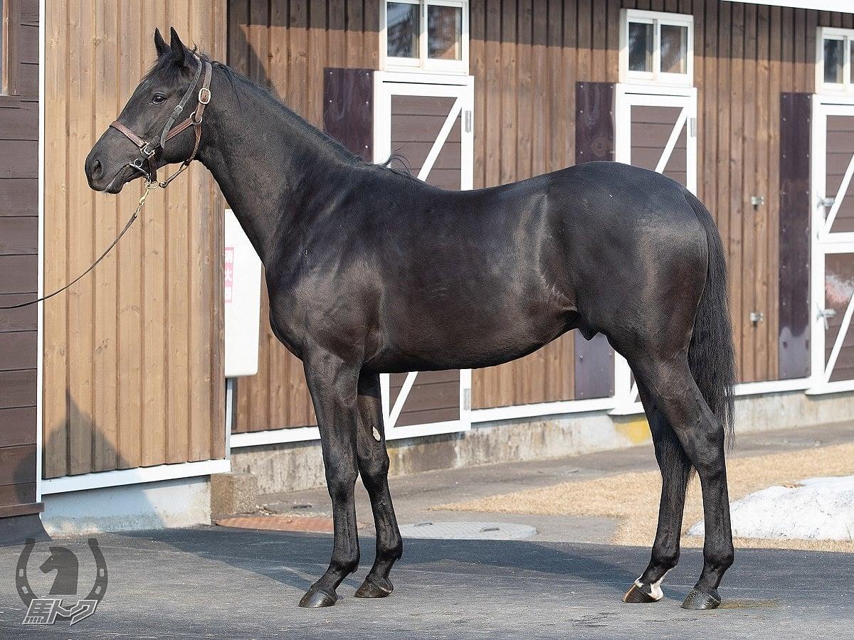 ヴェラアズールの馬体写真