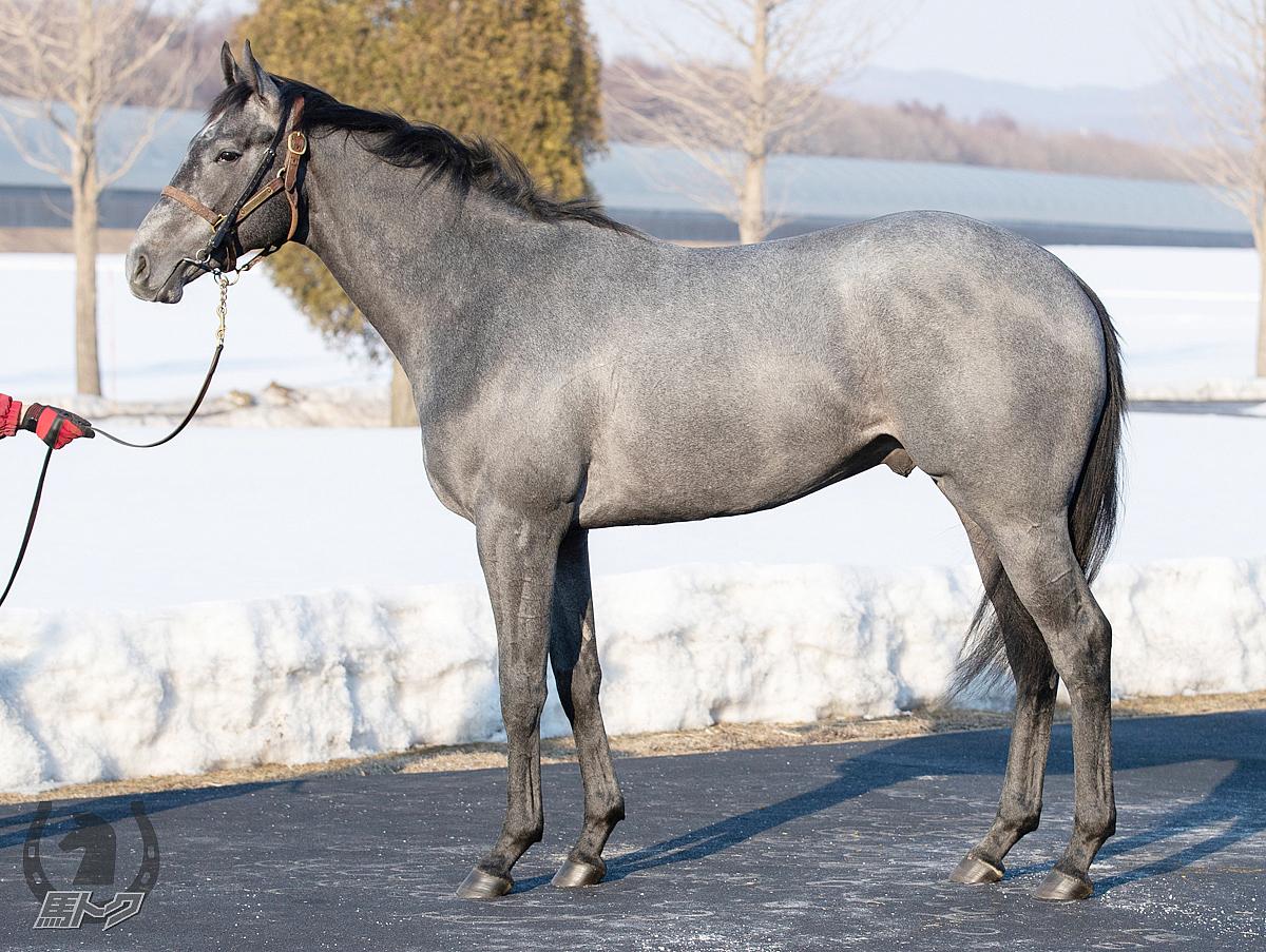グランデマーレの馬体写真
