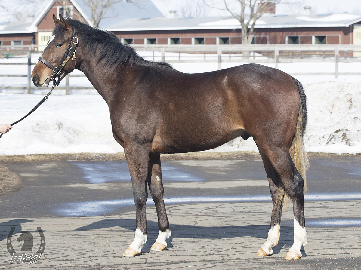 レッドカルマンの馬体写真