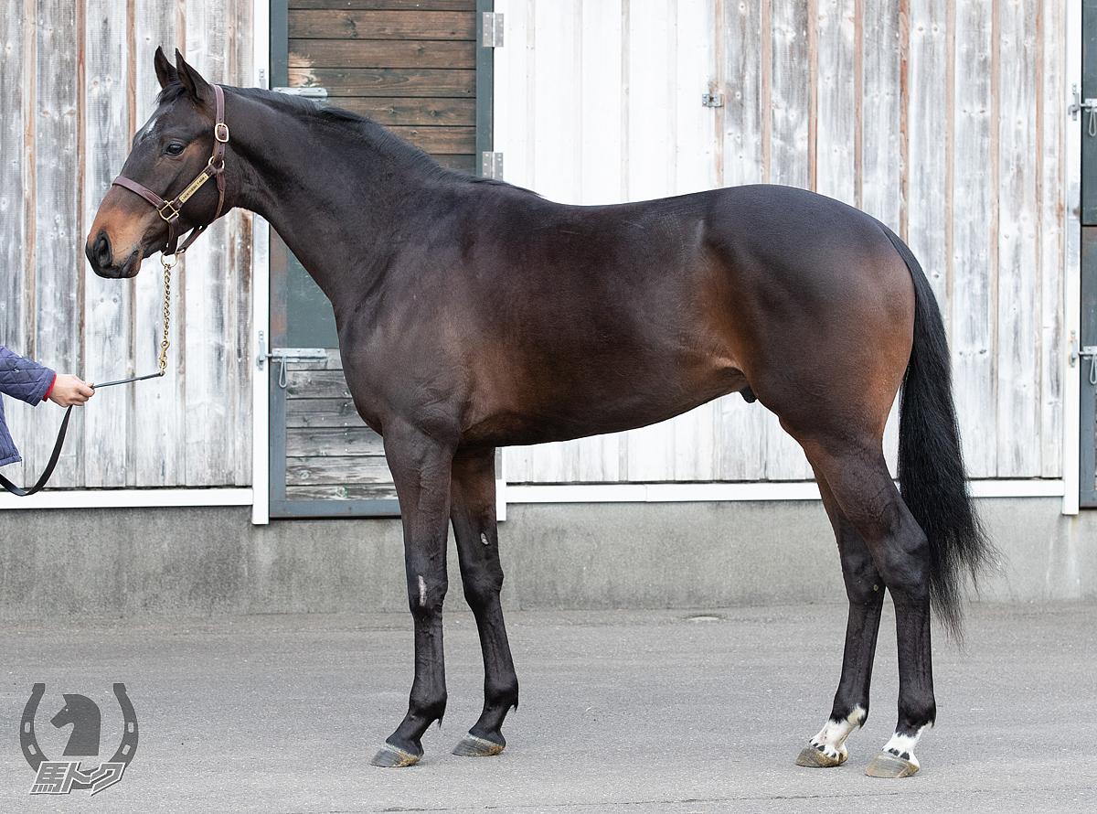 アルセストの馬体写真