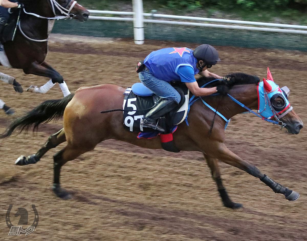 セウラサーリの馬体写真