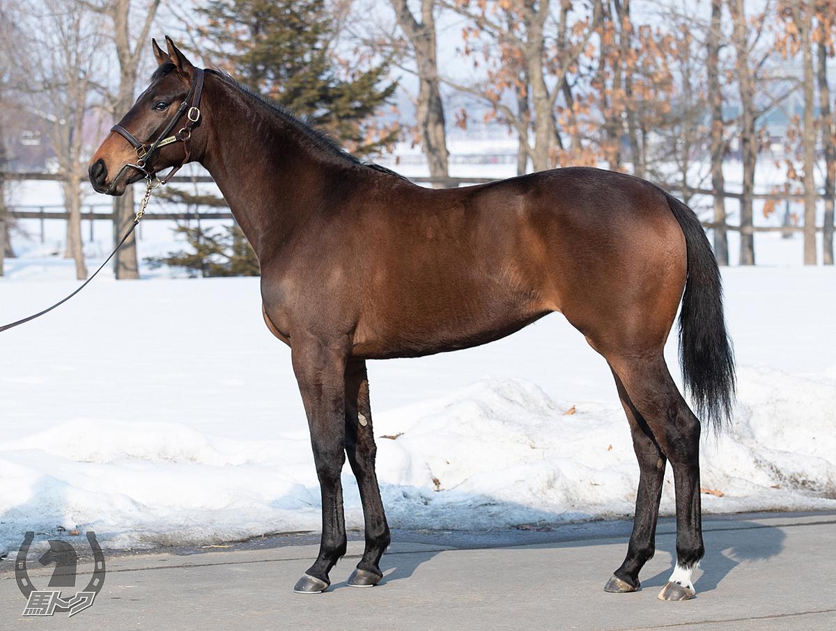 ルコントブルーの馬体写真