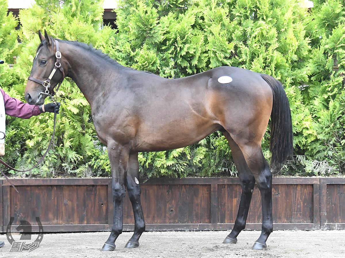 フライライクバードの馬体写真