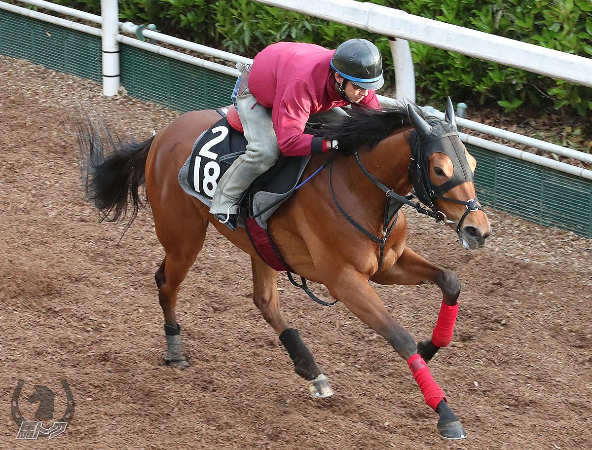 エレヴァテッツァの馬体写真