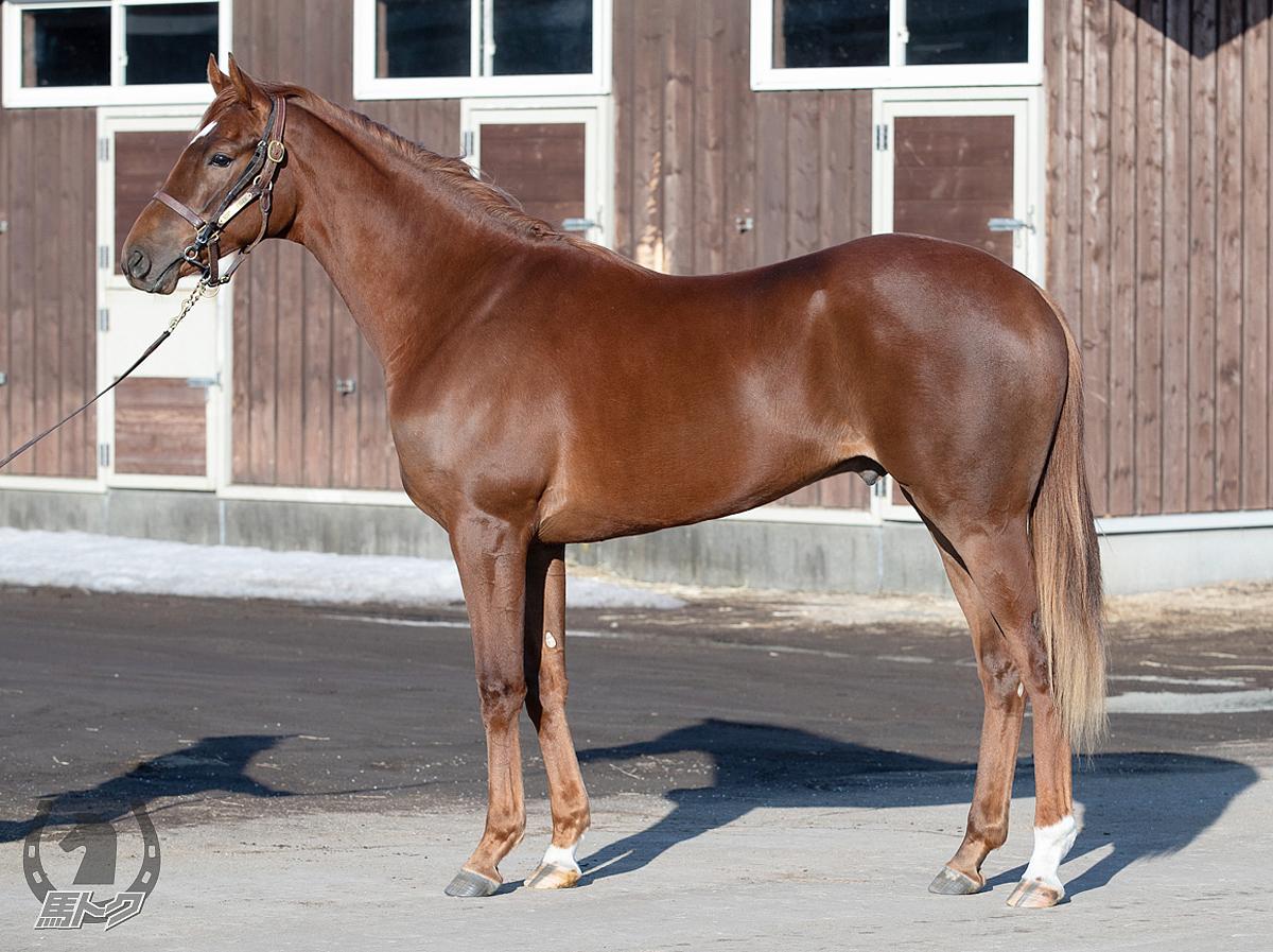 アバグネイルの馬体写真