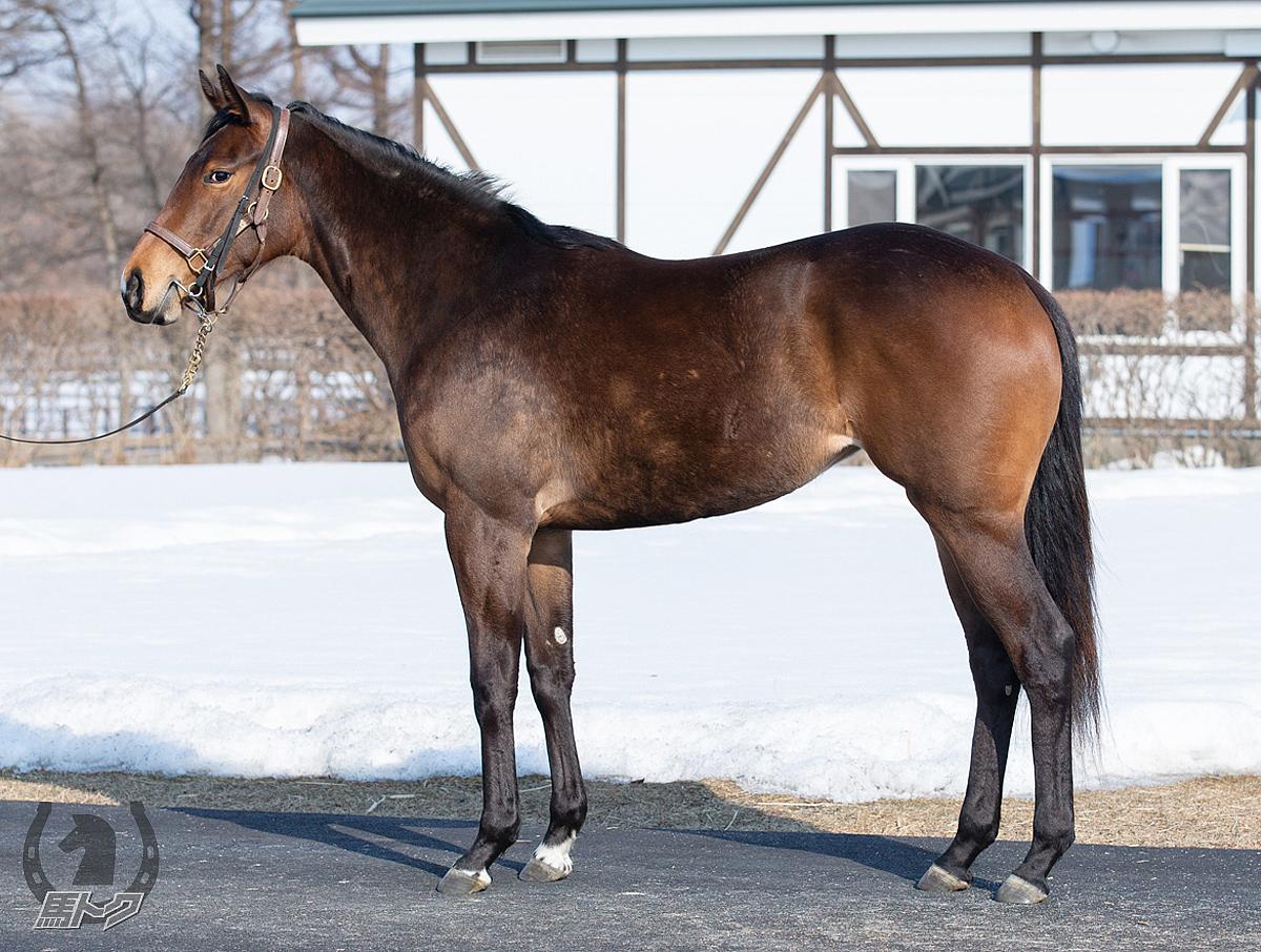 ナイトオブレディの馬体写真