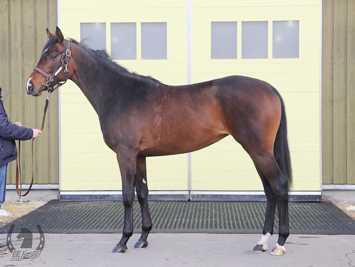 トゥインクルウェイの馬体写真