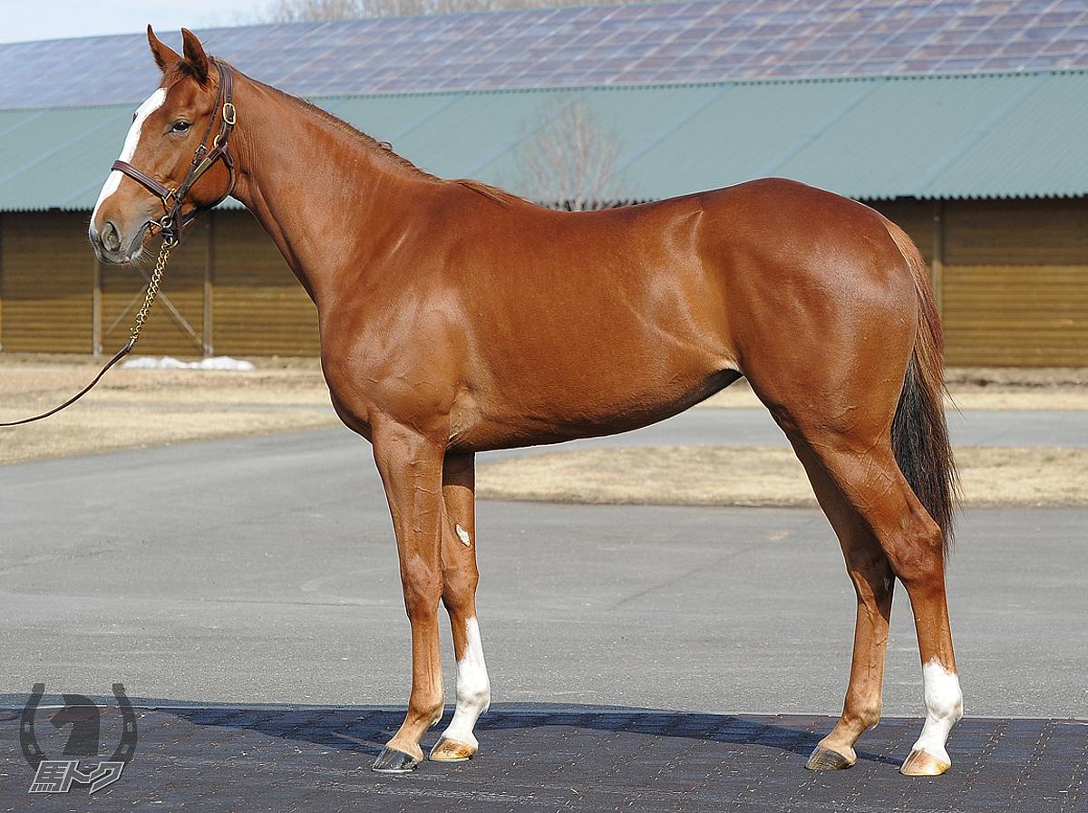 ラヴォアドゥースの馬体写真