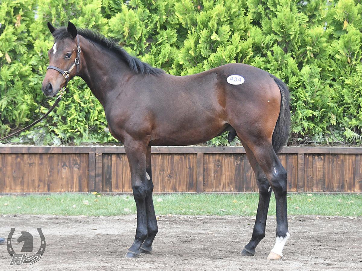 フェリシアーノの馬体写真