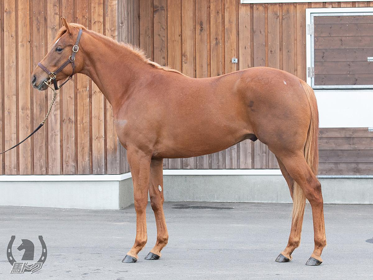 アコルドエールの馬体写真