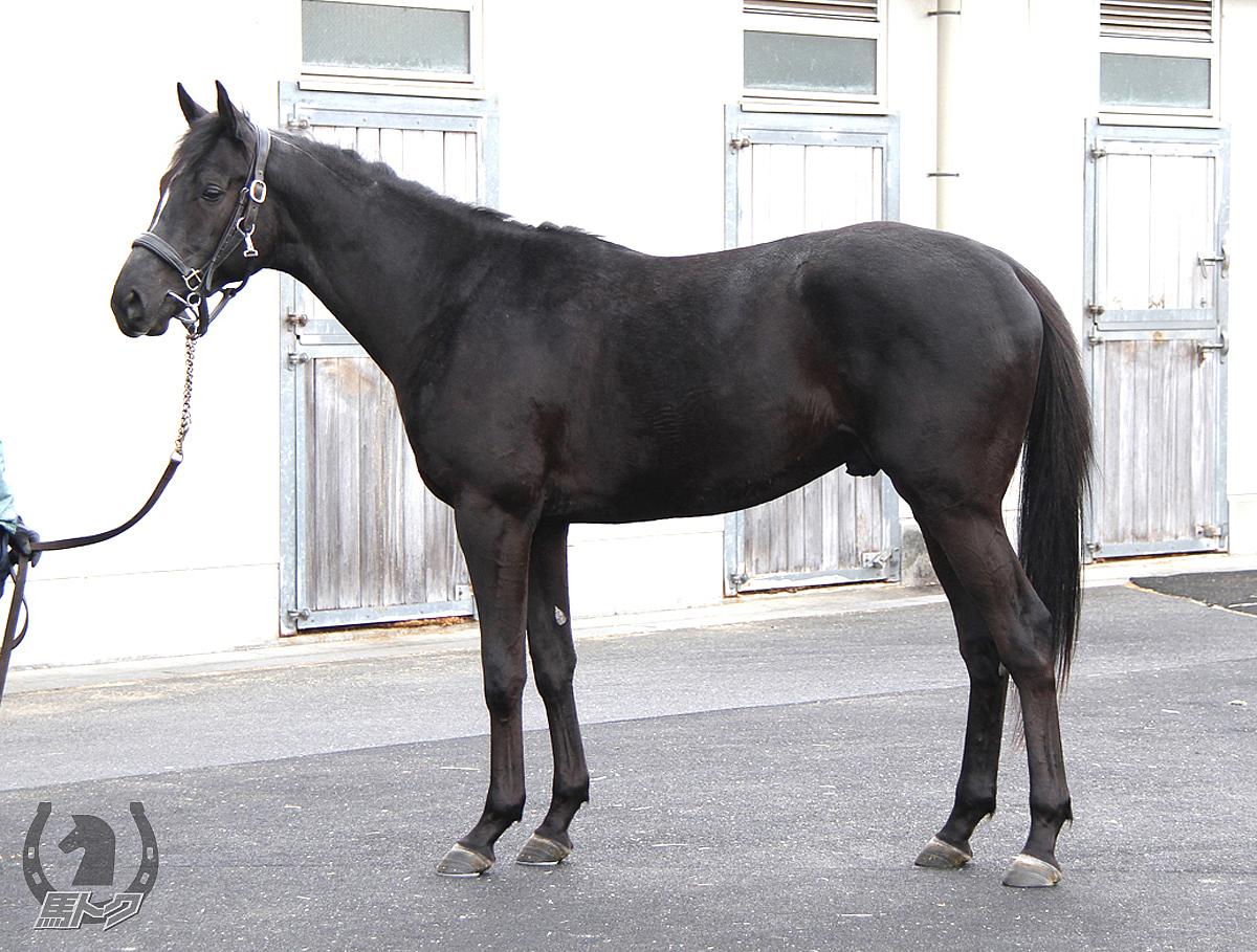 ネイプルスイエローの馬体写真