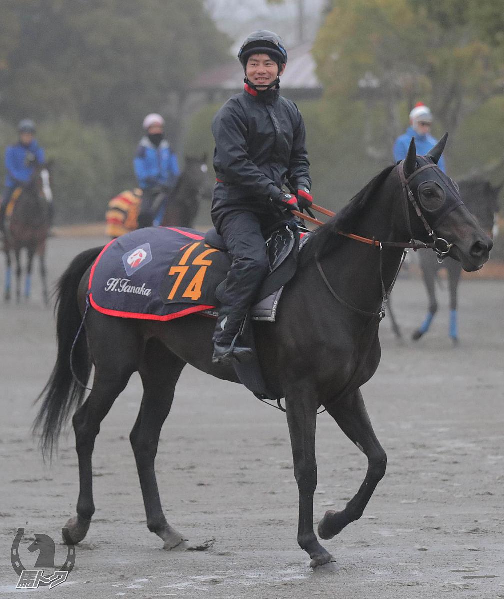 ポレンティアの馬体写真