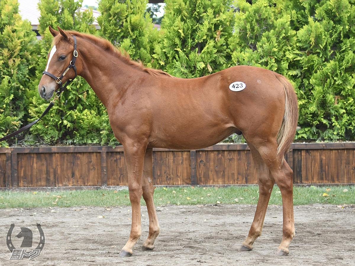 プルークファーレンの馬体写真