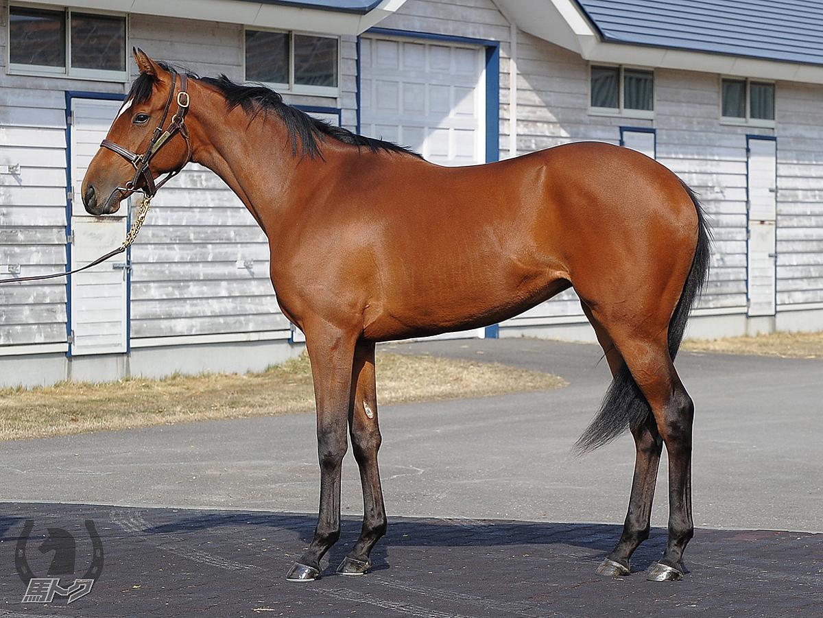 イトシキオモイの馬体写真