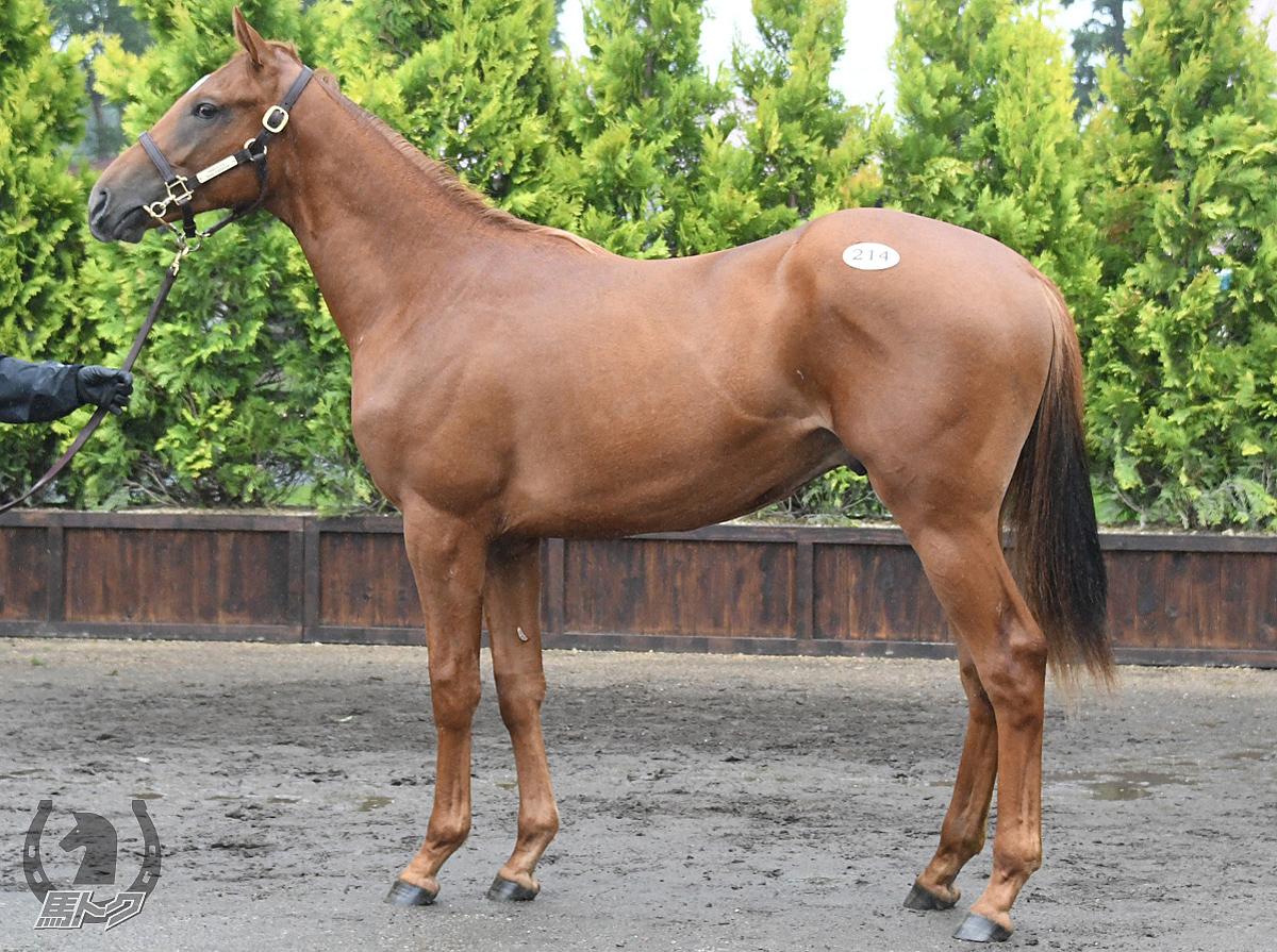 カフジピスケスの馬体写真