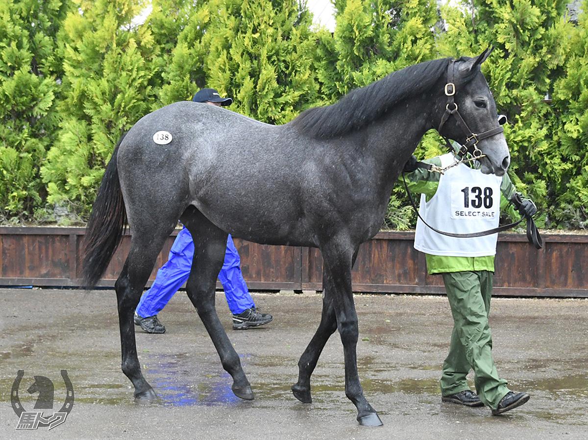 シネマトグラフの馬体写真