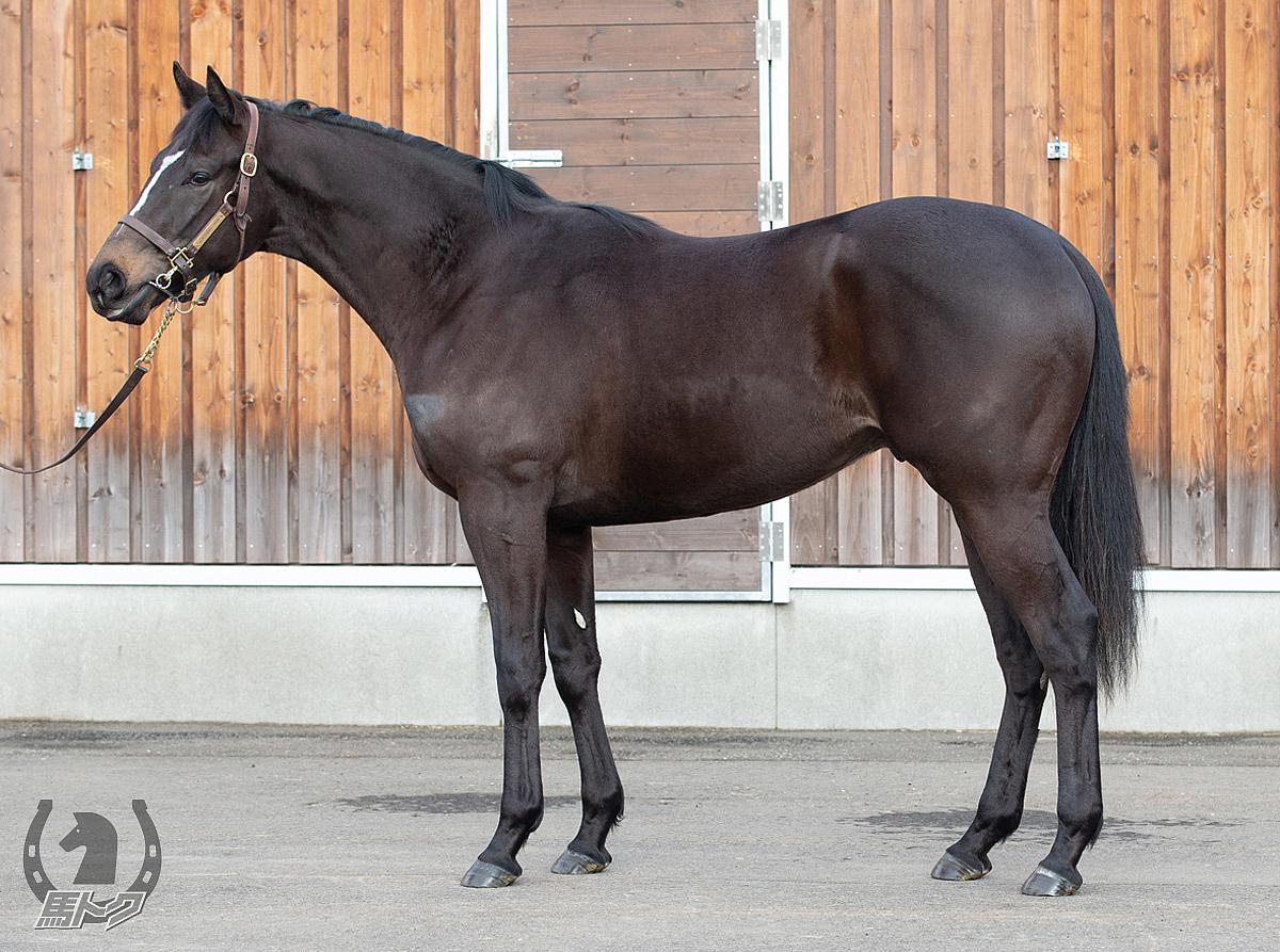 カイザーラインの馬体写真