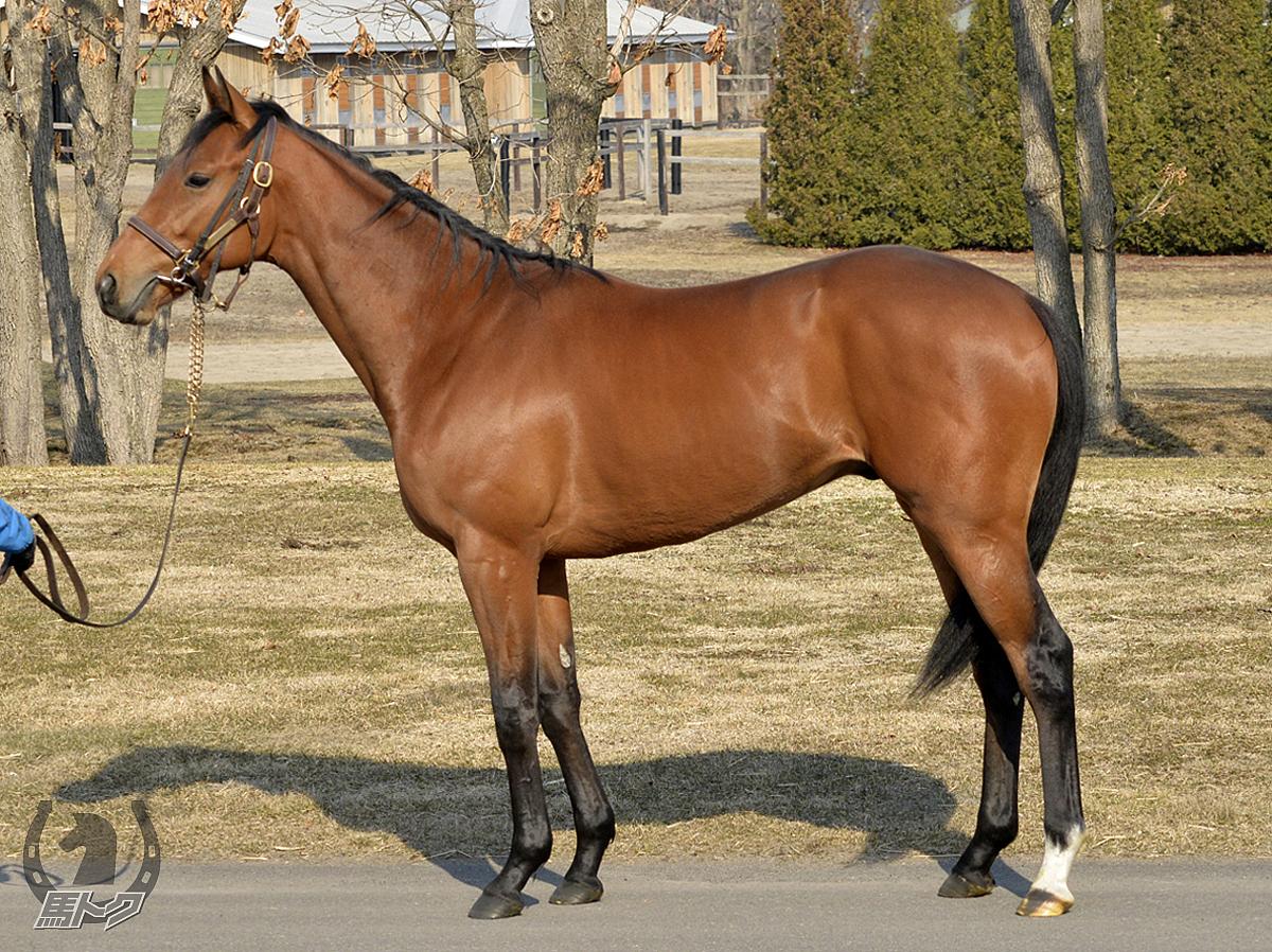 アウサンガテの馬体写真