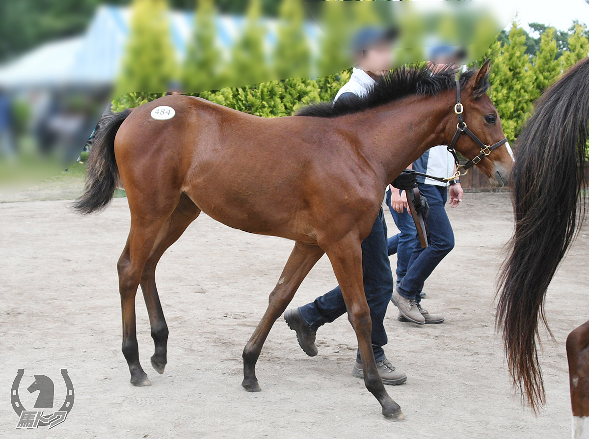 ナンヨーアイゼンの馬体写真