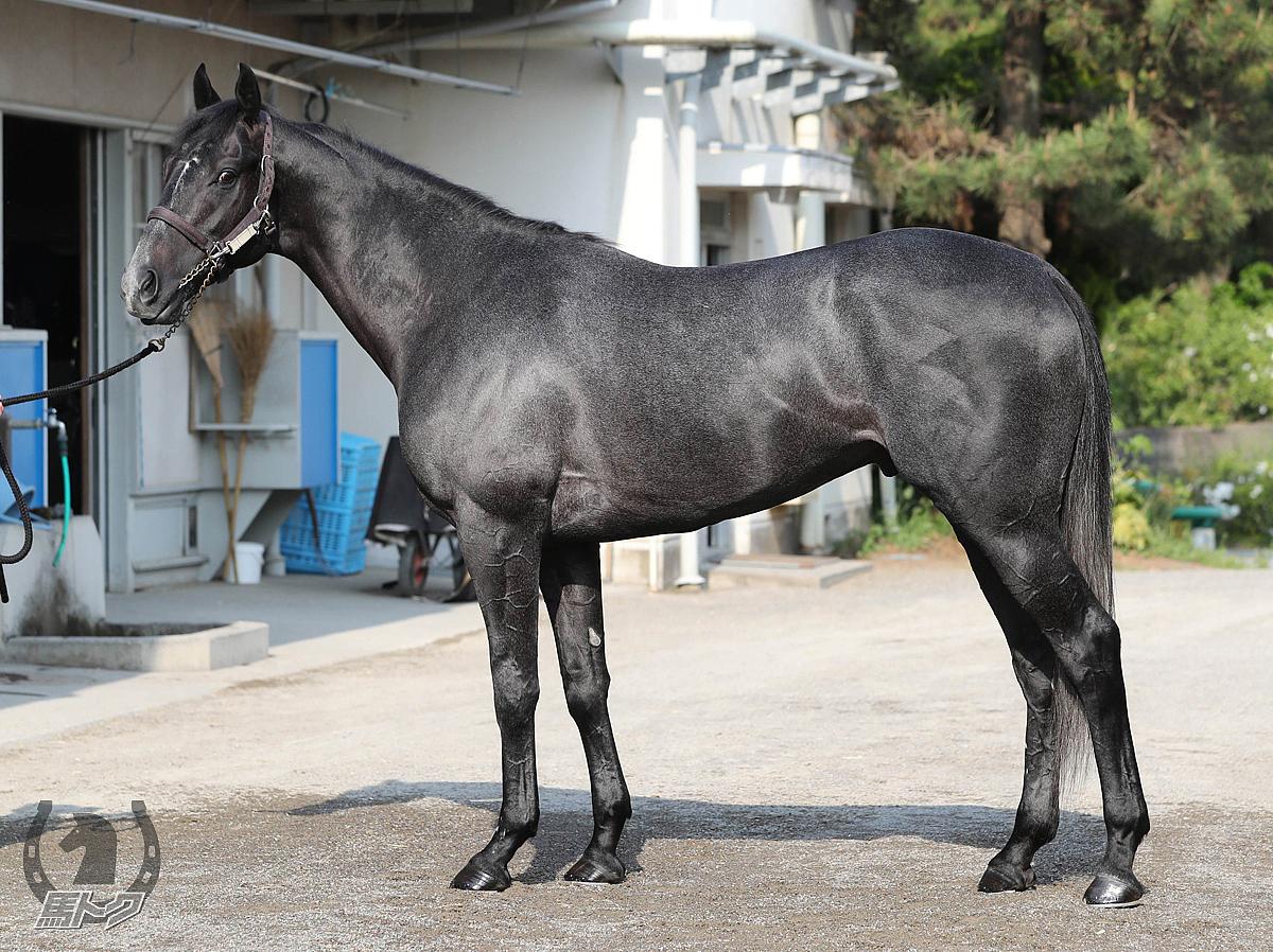 サクセッションの馬体写真