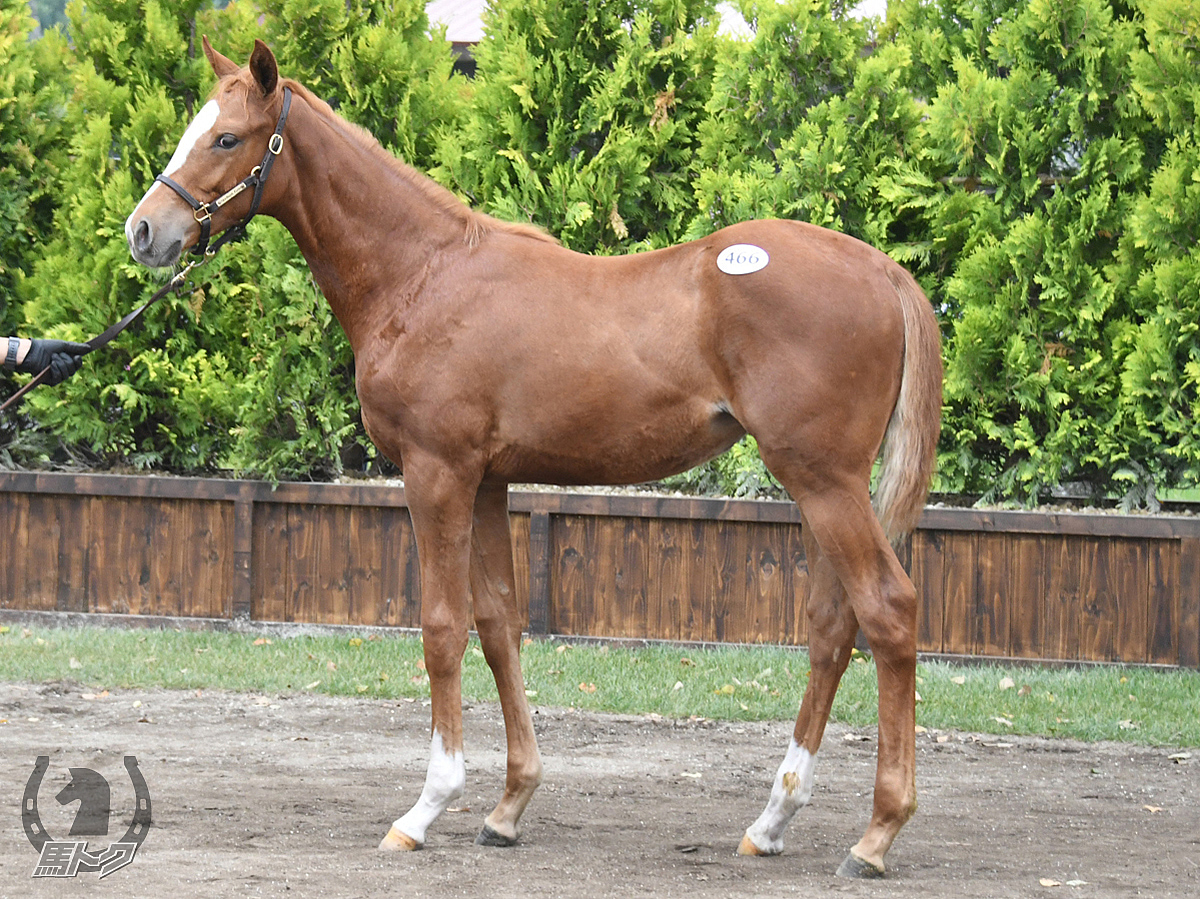ミッキーベルの馬体写真