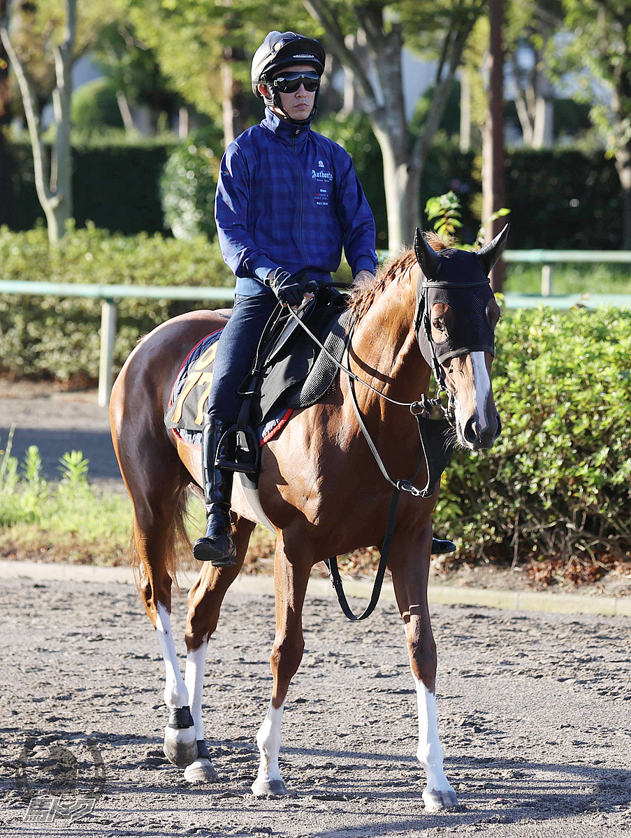 スカイグルーヴの馬体写真