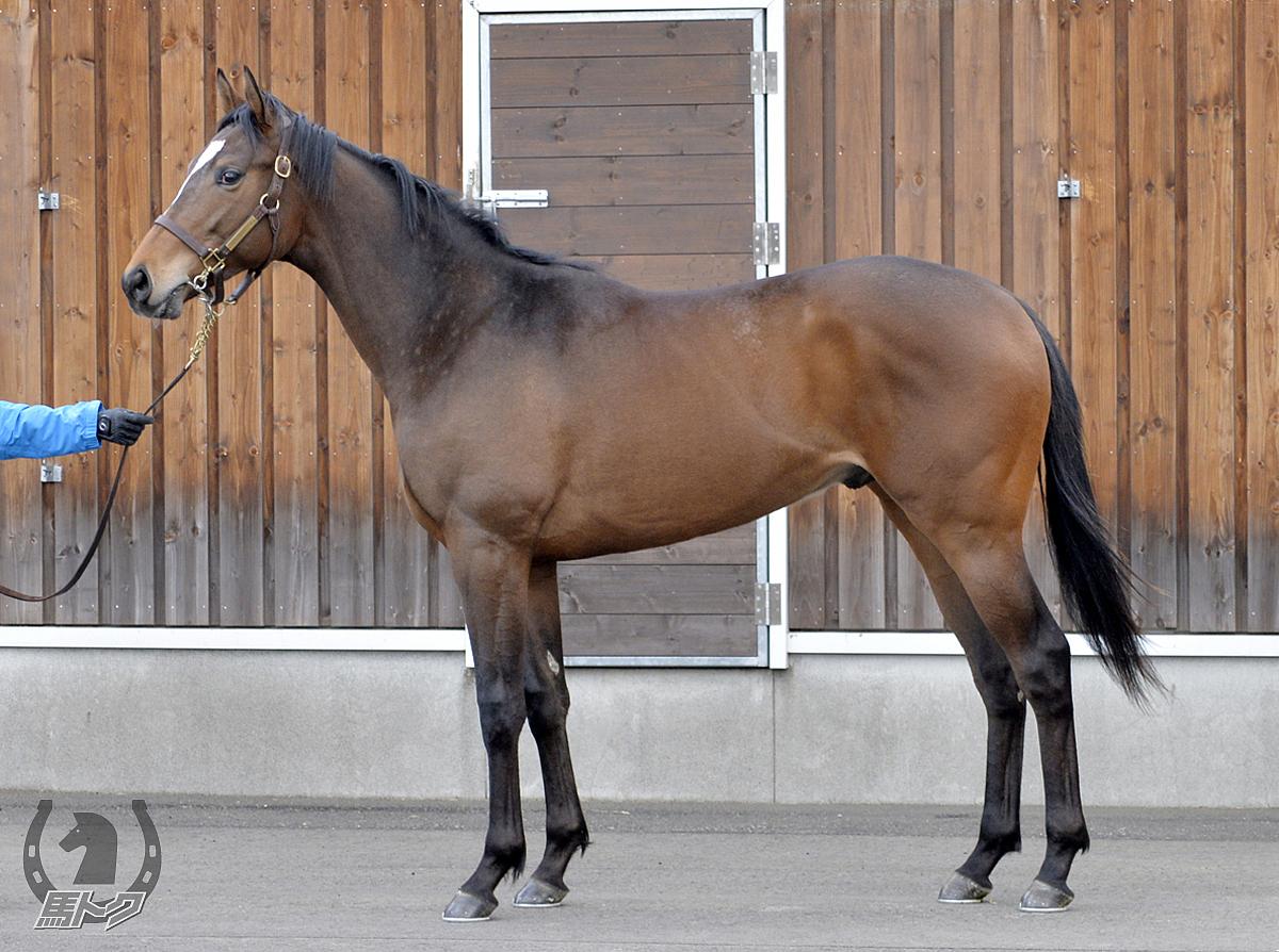 ミレニアムクロスの馬体写真