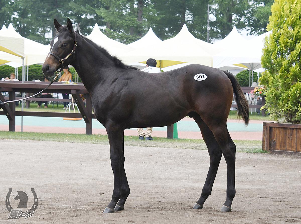 アナバチャーレの馬体写真