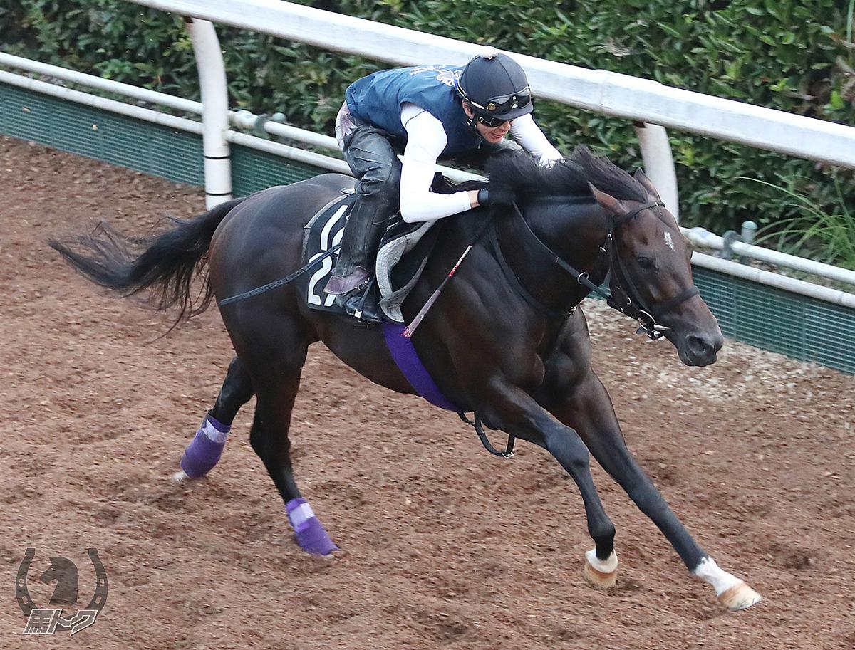 ラインベックの馬体写真