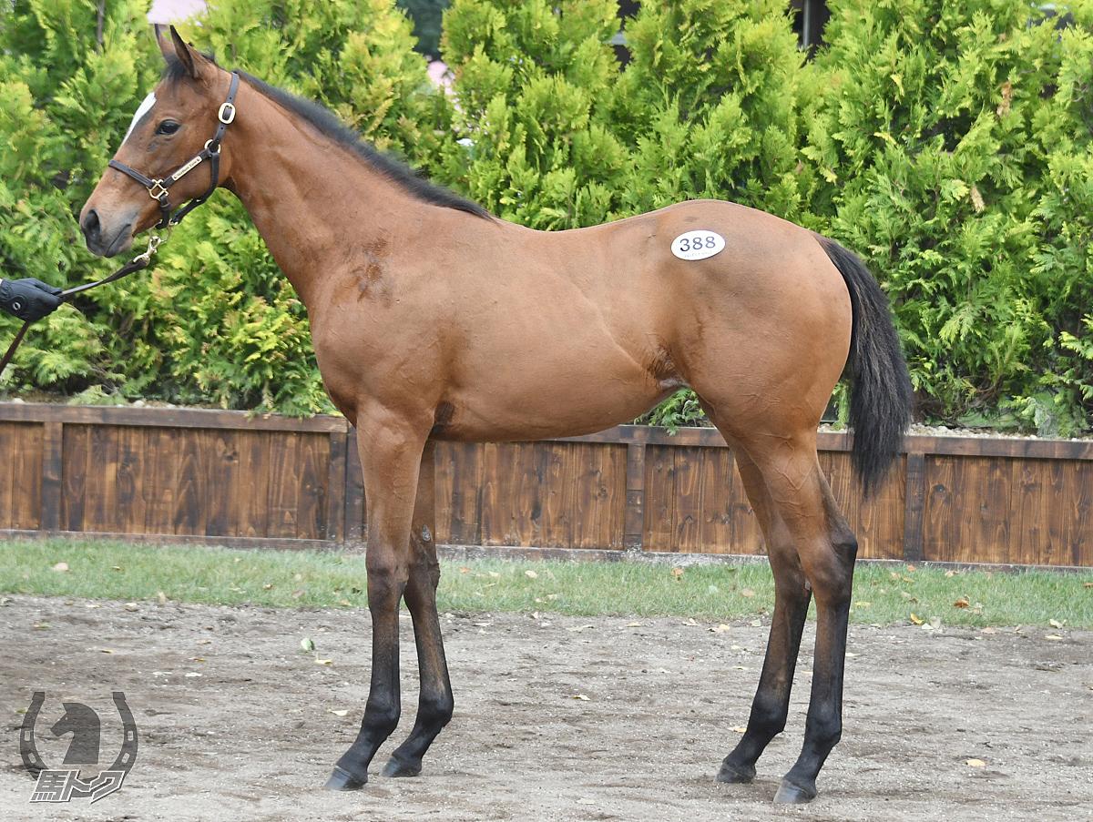 パンゲアの馬体写真