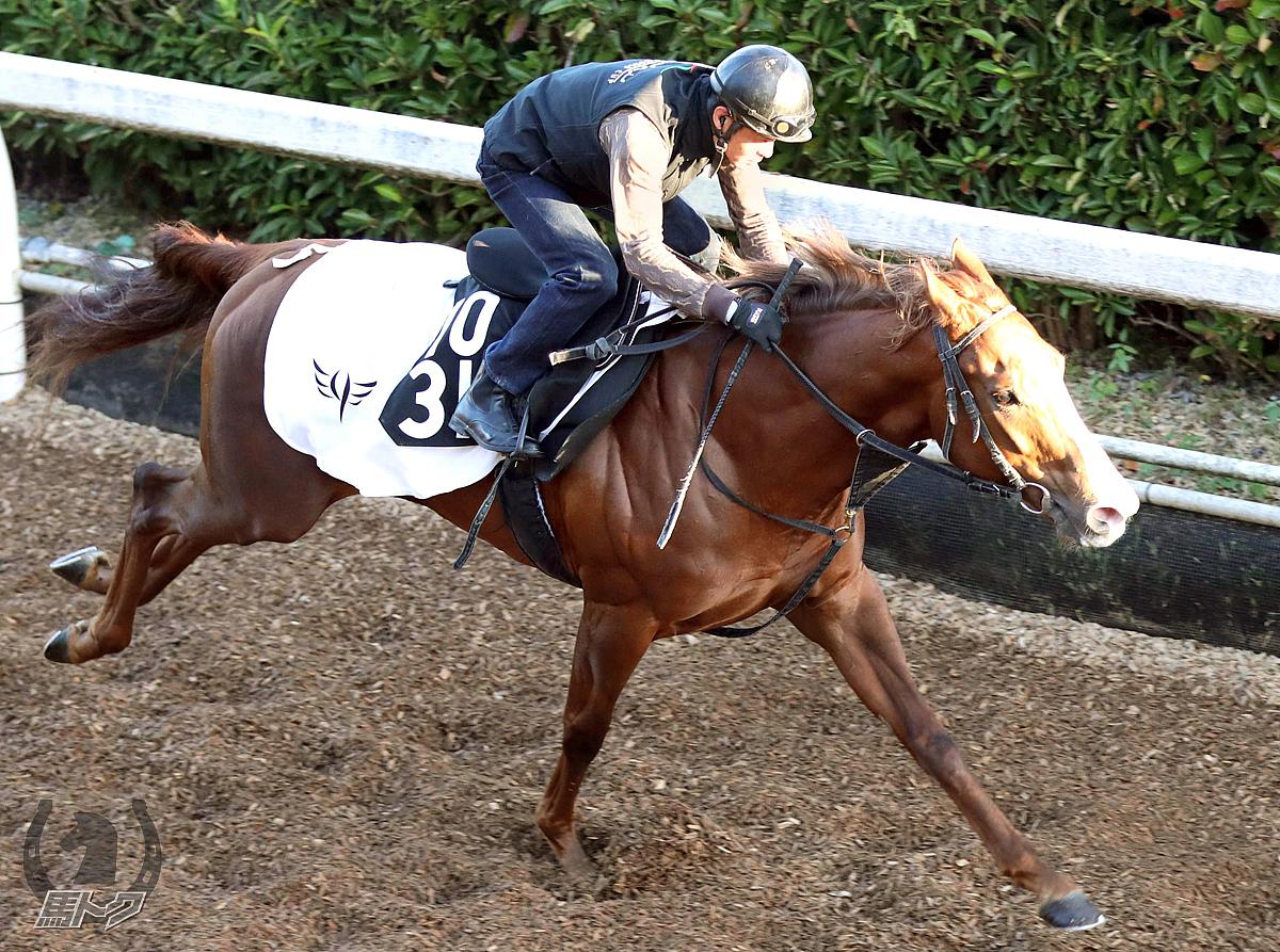 ペールエールの馬体写真