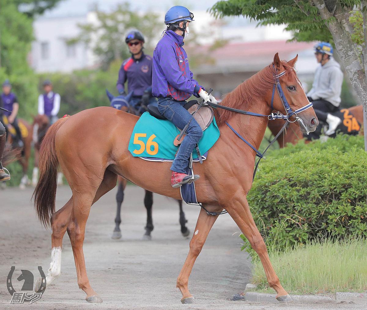 ファートゥアの馬体写真