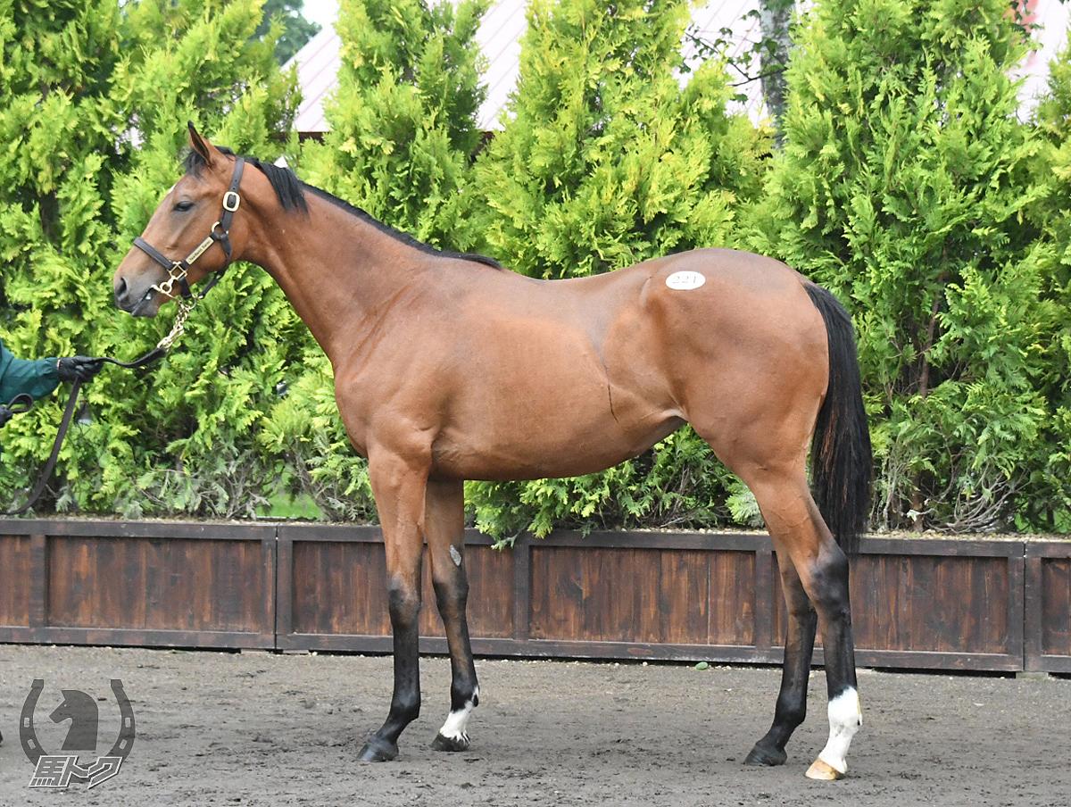 ドナキアーロの馬体写真