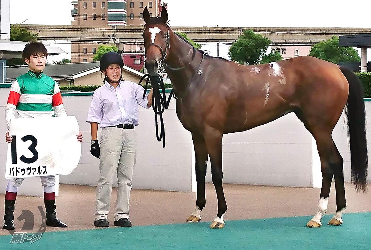 パドゥヴァルスの馬体写真