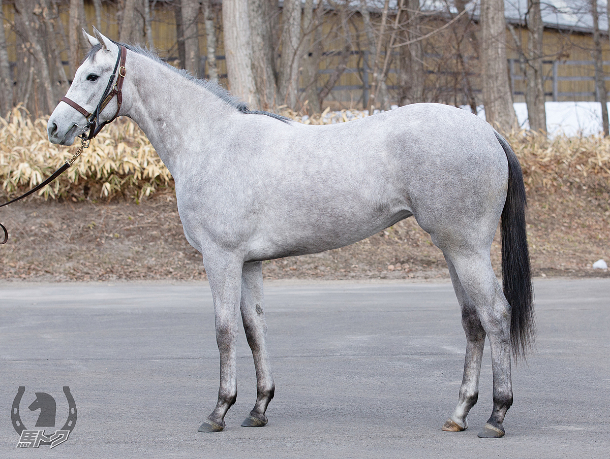 ローヌグレイシアの馬体写真