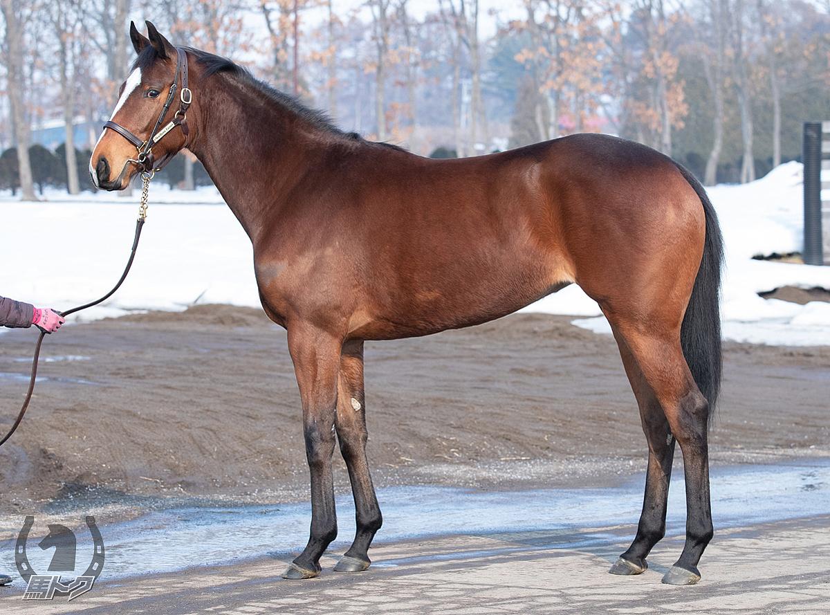 マスターワークの馬体写真