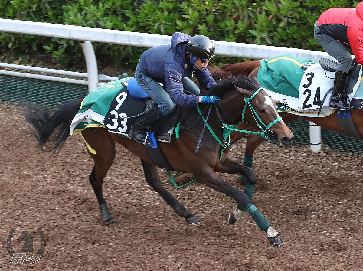 フアナの馬体写真