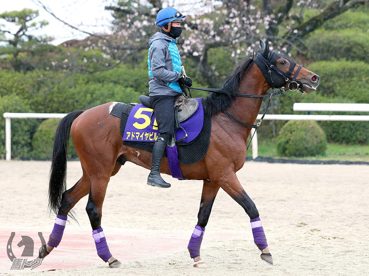 アドマイヤビルゴの馬体写真