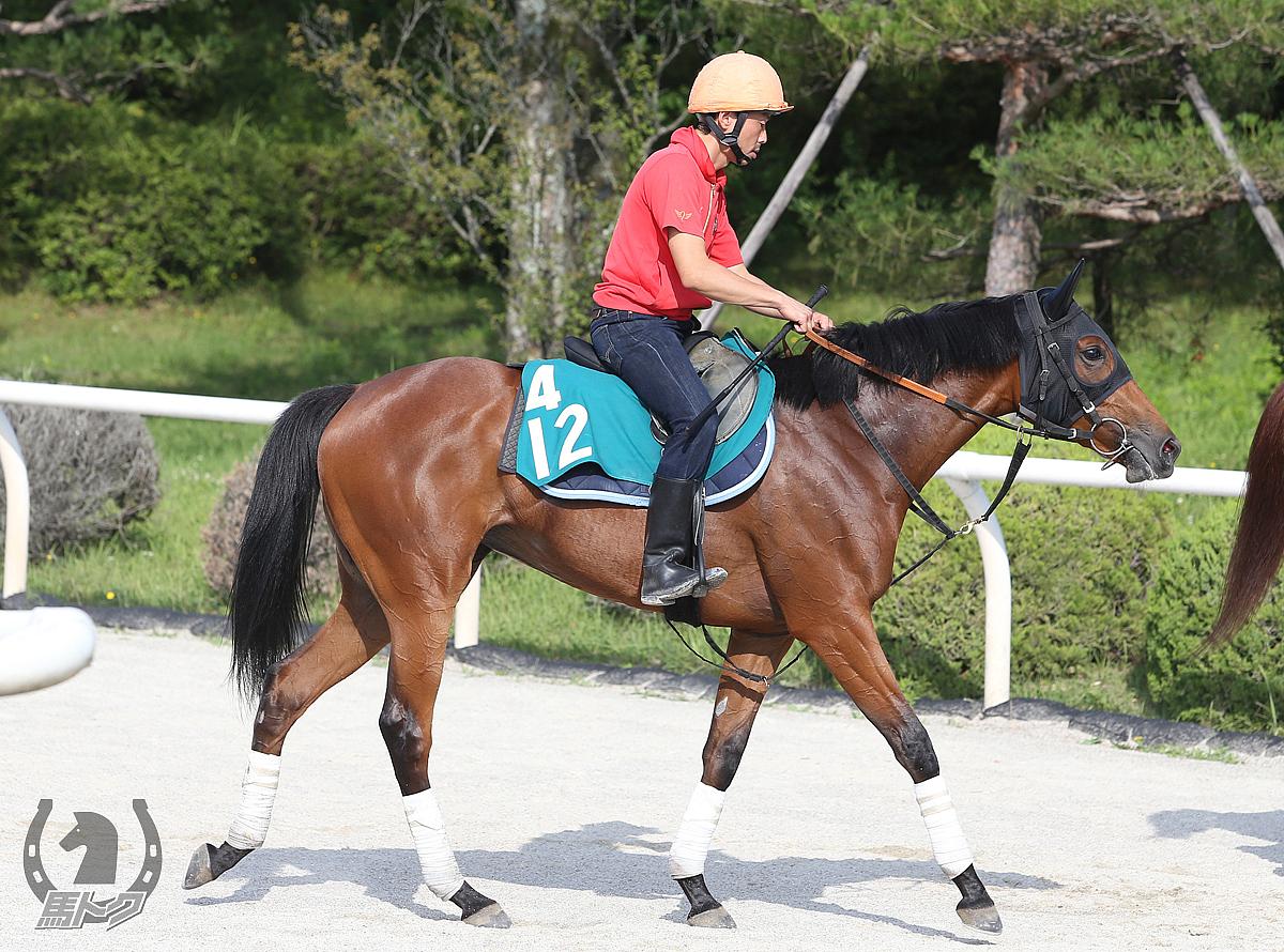 アージオンの馬体写真