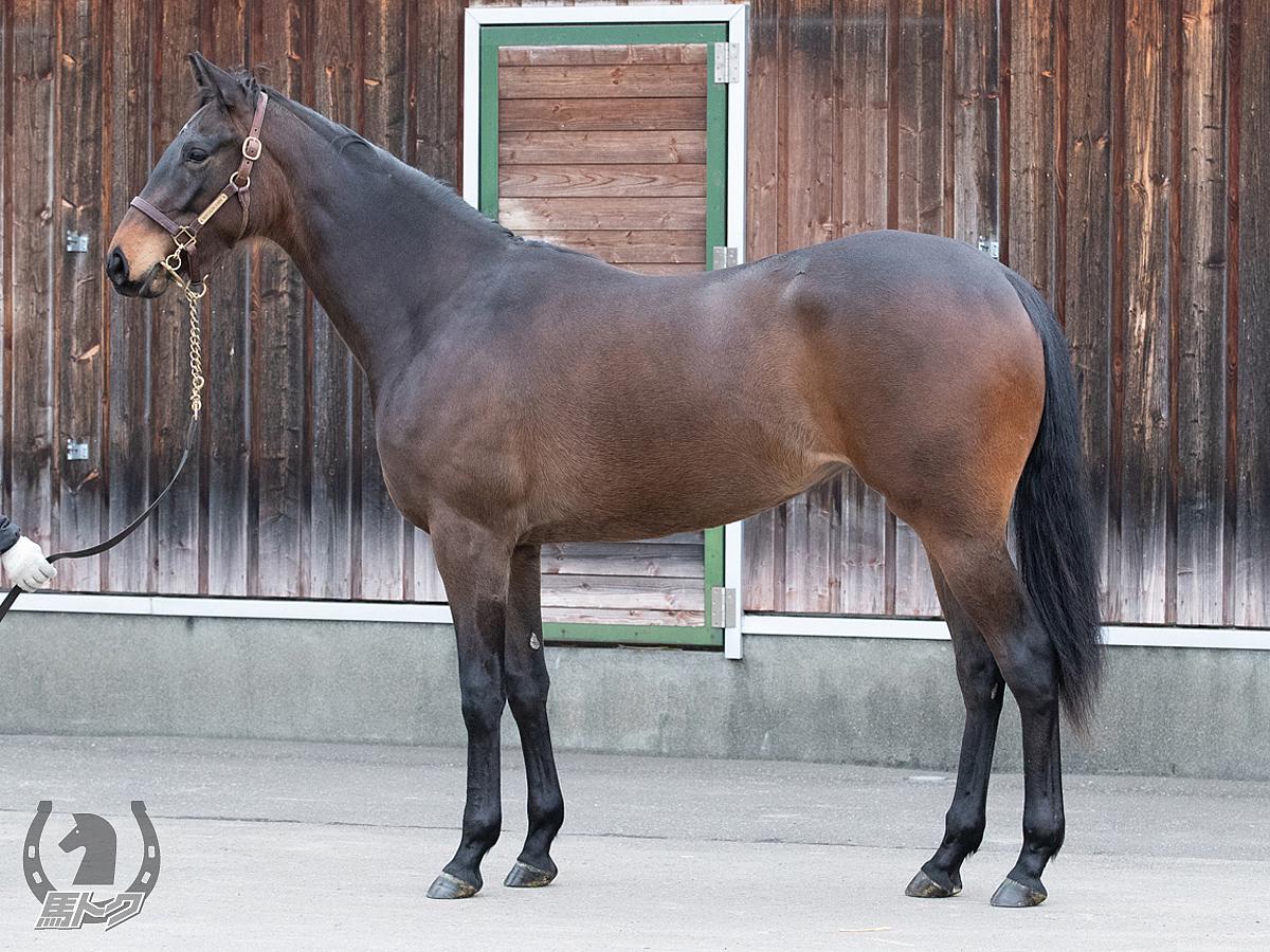ジョインザフロウの馬体写真