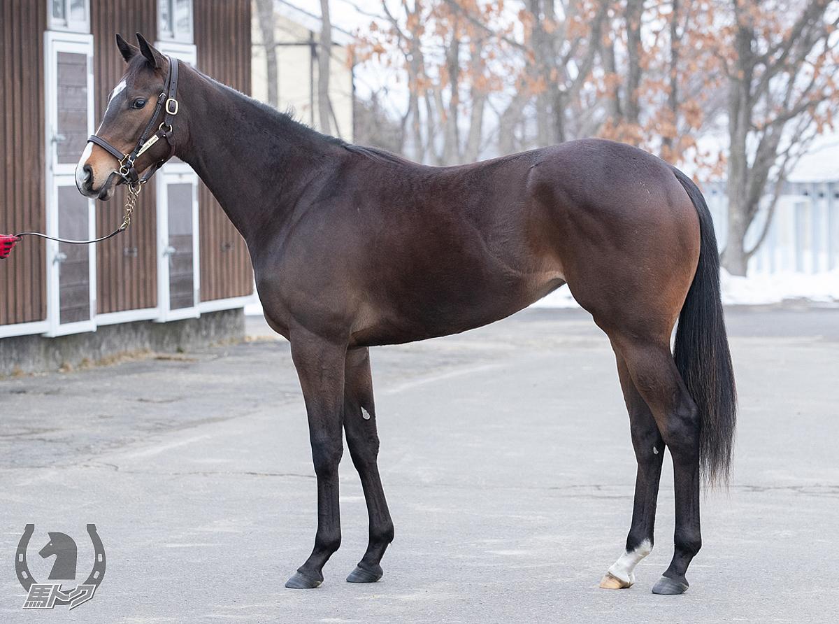 アクロアイトの馬体写真